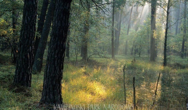 Kampinos National Park - a true natural gem right outside of Warsaw, Poland. awomanafoot.com