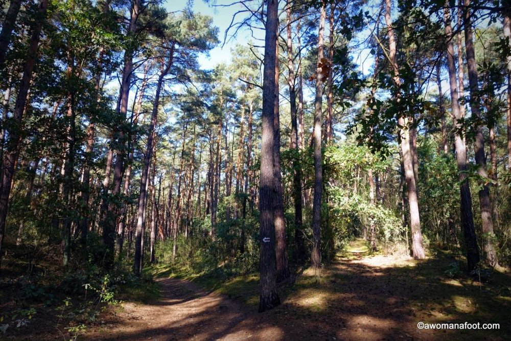 Kampinos National Park - a true natural gem right outside of Warsaw, Poland. awomanafoot.com #Poland #Warsaw #CultureTravel #Travel #VisitPoland What to do in Warsaw