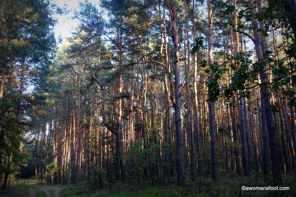Kampinos National Park - a true natural gem right outside of Warsaw, Poland. awomanafoot.com #Poland #Warsaw #CultureTravel #Travel #VisitPoland