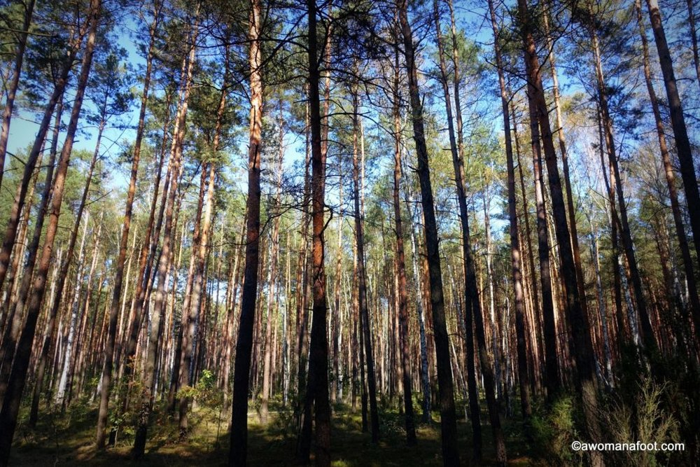 Hiking with anxiety - this time, in the #Kampinos National Park, #Warsaw, #Poland. Stunning fall foliage with the side of anxious thoughts. #hiking #solohiker #femalesolo #mentalhealth #anxiety #Warsaw What to do in Warsaw   National Parks in Poland   Hiking in Poland   awomanafoot.com