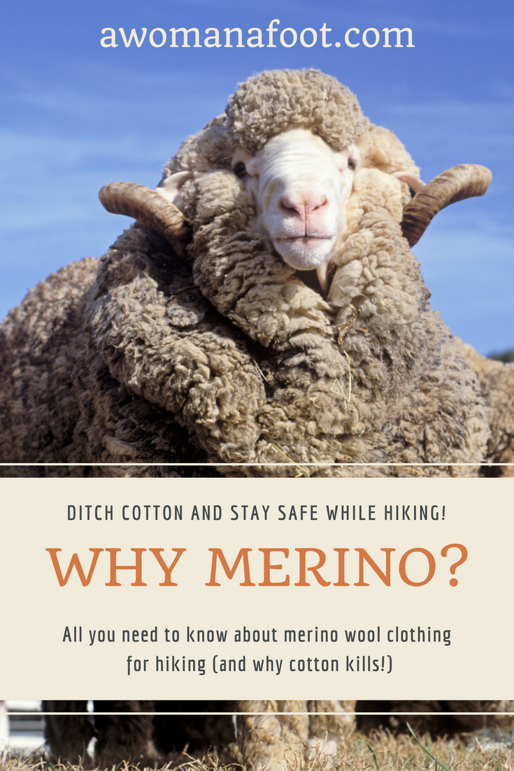 COTTON KILLS! Click to find out why you should to be wearing merino wool when hiking! #hiking #gear #backpacking #merino #wool | Why wearing merino is best for hiking | What is merino wool?| What should I wear when hiking? | #CottonKills | Why you can't wear cotton hiking | #backpacking | #hikingtips |awomanafoot.com