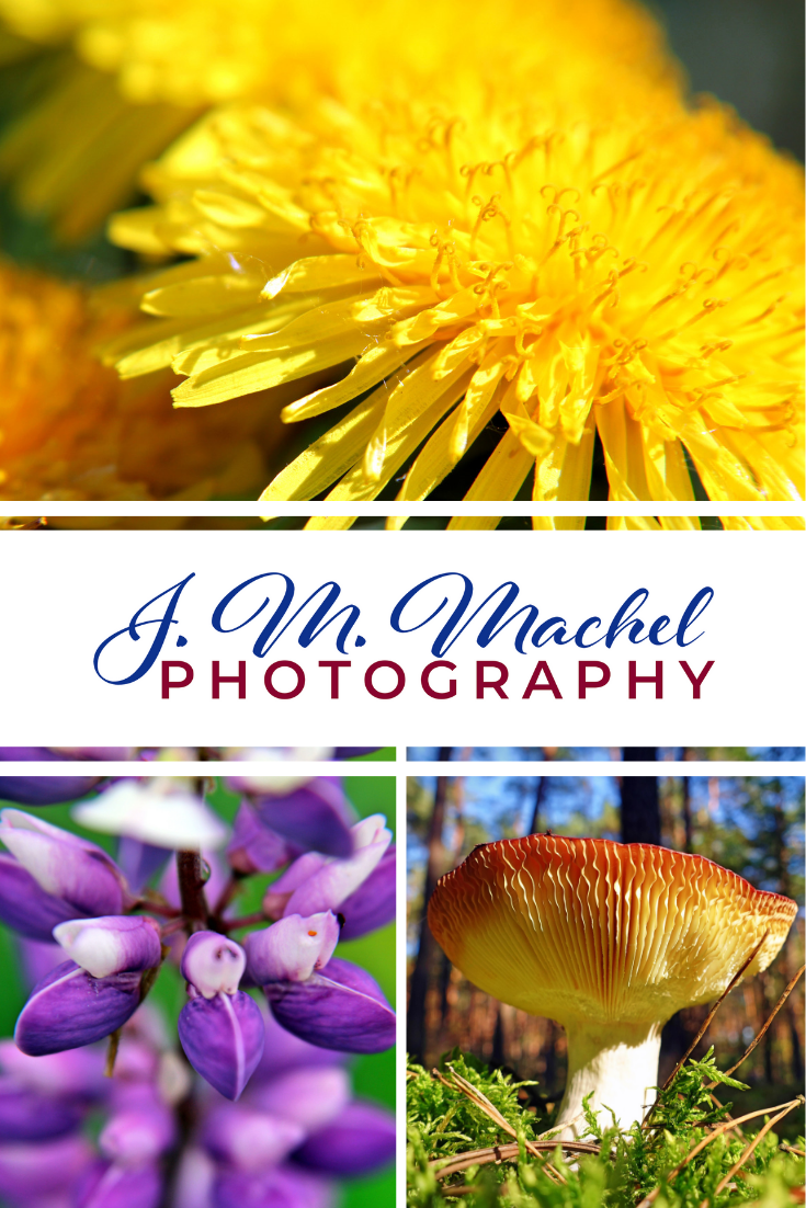 Beautiful and unique Nature and Travel photography by J. M. Machel - a solo female hiker and the mind behind the A Woman Afoot blog. Stunning macro images, breath-taking landscapes, and love for Nature in every picture. Which one will be your favorite? #Photography #ArtPhotography #NaturePhotography #MacroPhotography #TravelPhotography #Hiking #Camping #Nature #Gifts #GiftIdea #GiftGuide