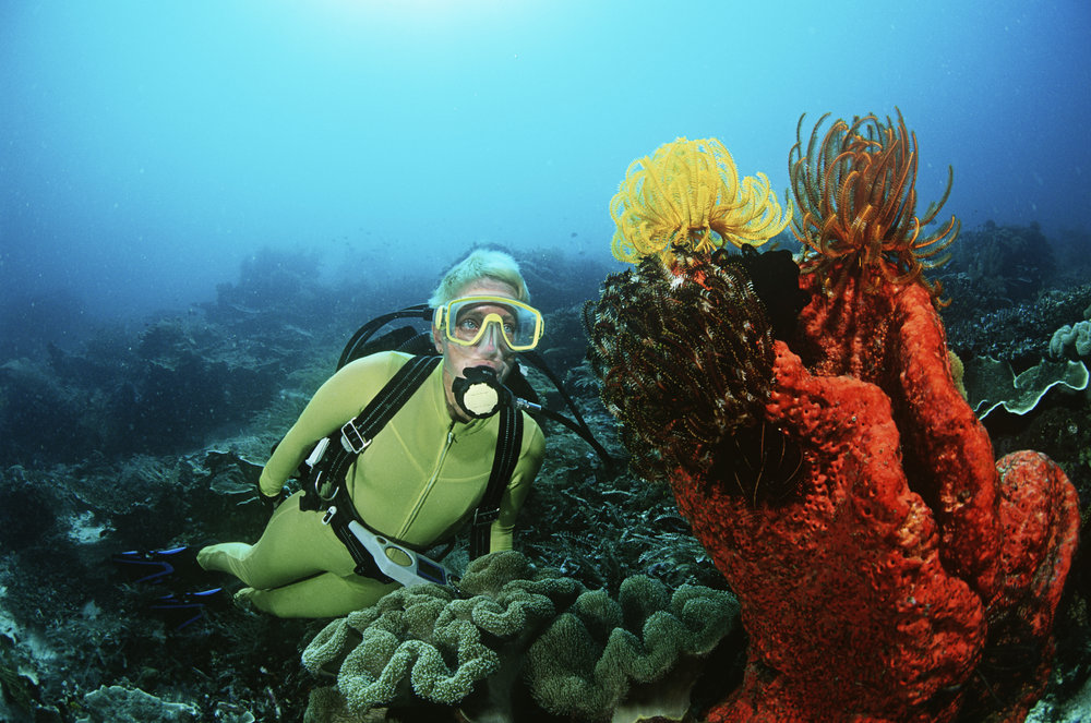 Woman scuba diving in coral reef.