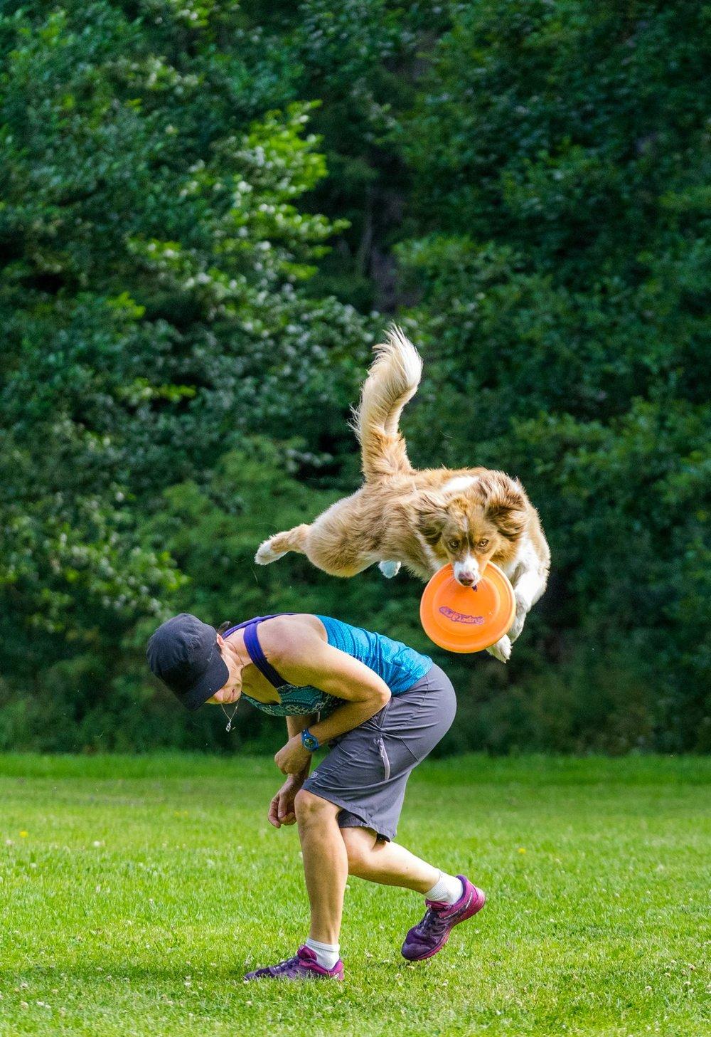 muzo-lyon-chien-frisbee-big-over-berger-australien-2.jpg
