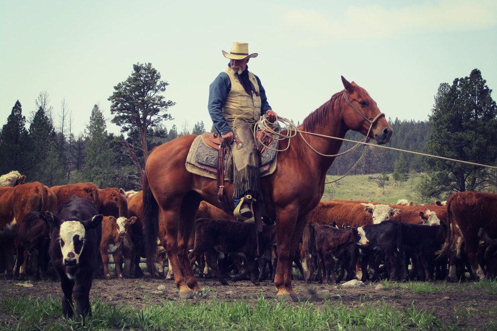 Risultati immagini per DOUGLAS LAKE  ranch british columbia