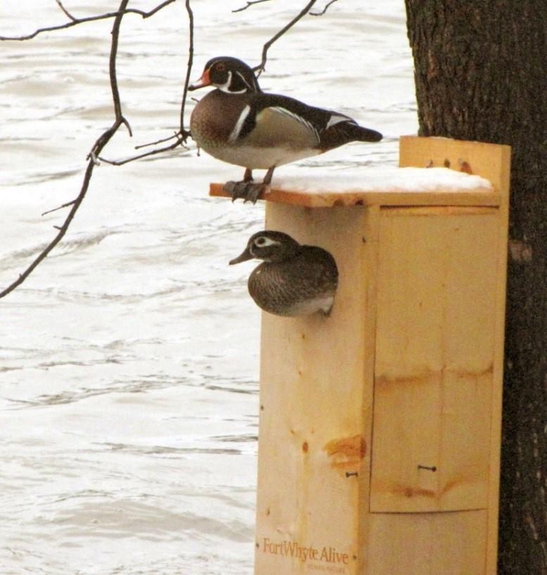 duck box.jpg