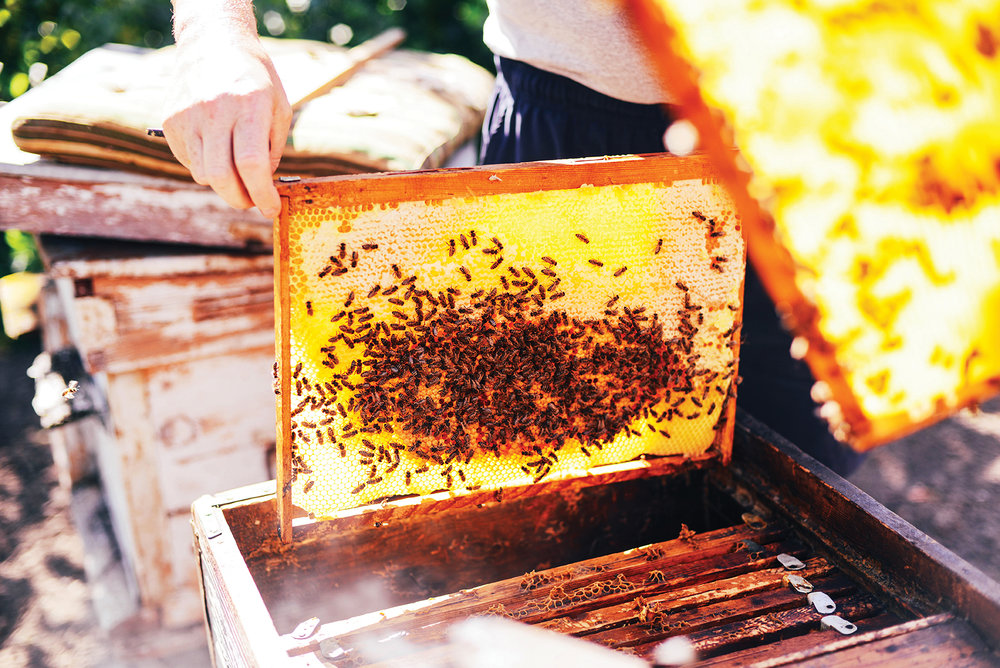bigstock-Frames-Of-A-Bee-Hive-Beekeepe-144804875.jpg