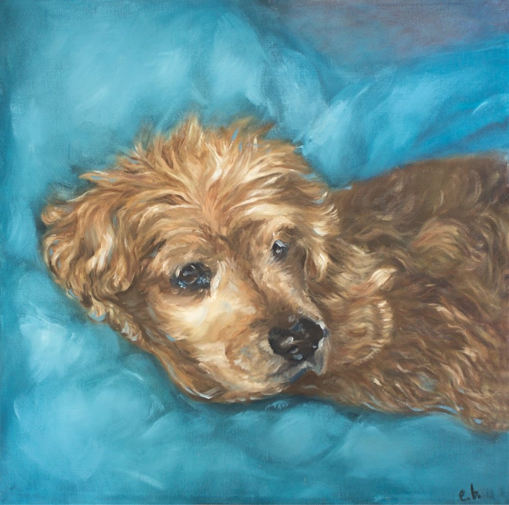Pet Portrait of a Cocker Spaniel Rescue Dog Named Dudley
