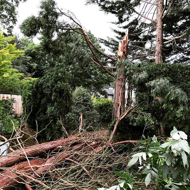 The surprise Father's Day Storm. This tree came crashing down at my parents house. Weather can create opportunities for your company to get some free PR if you know what newsrooms are looking for.  #portland #pdxlife #pdxlove #oregonliving #oregonlife #pdxrealestate #portlandoregon #portlandnw #portlandeats #portlandpdx #portlandhomes #portlandtattoo #portlandbeer #smallbusiness #lakeoswego #beavertonoregon #bendoregon #portlandrealtor #realestateagent #oregonrealestate #realestateagent #portlandwedding #portlandfashion #portlandbride #portlandfoodies #entrepreneur #branding #personalbranding #mediarelations #pr