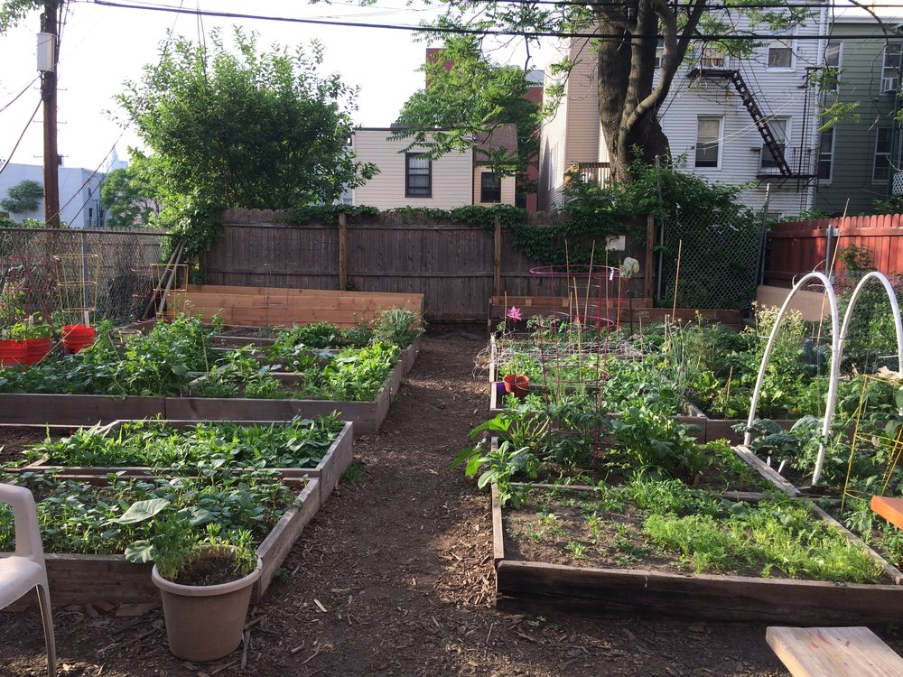 Community garden project, Brooklyn NY