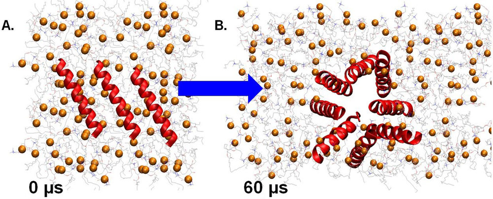 Figure 1. Formation of a pore inside the membrane after 60 µs of the molecular dynamics simulation. Subfigure A is the starting position with peptides position parallel to the membrane as described in the methods and subfigure B is the predicted result after the model simulated atomic interactions of the peptides.