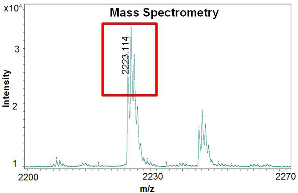 Figure 8. Mass Spectrometry results, which helps determine if the peptide synthesis was done correctly based on the expected range of masses.