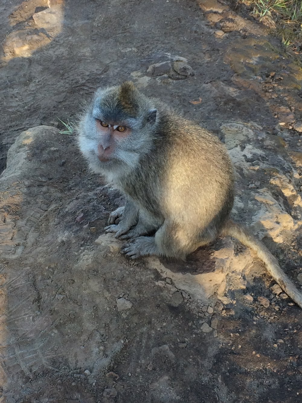 Met a few more monkey friends on our way down the mountain. These ones were a bit less scary.