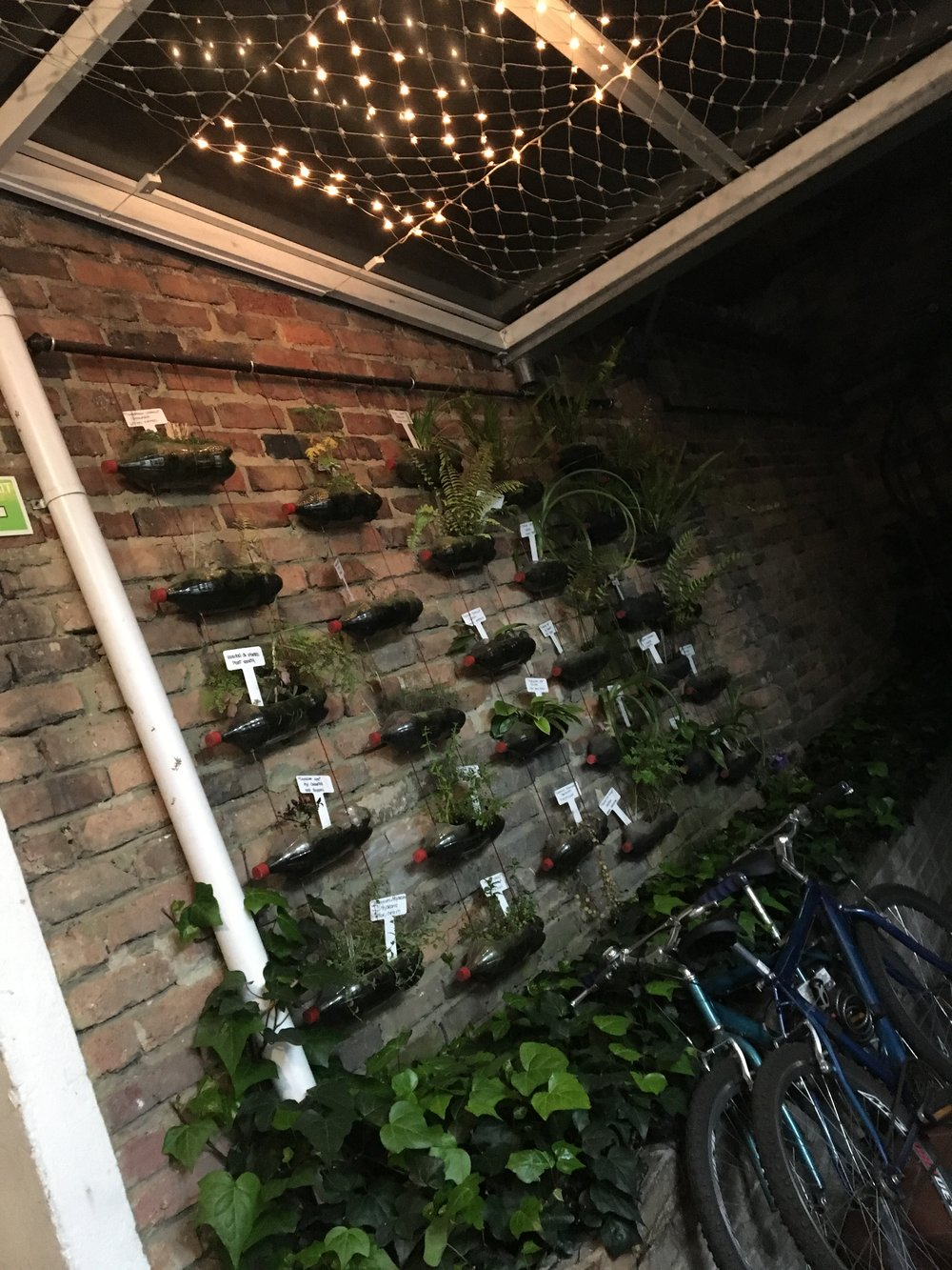The vertical herb garden outside our room at the hostel.