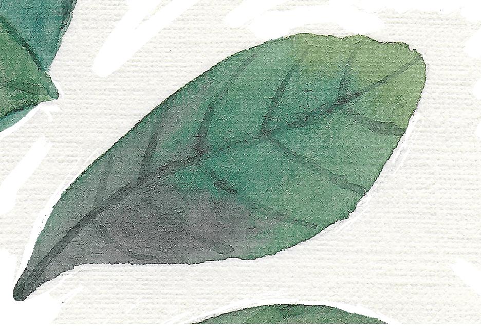 leaf 4_3.png