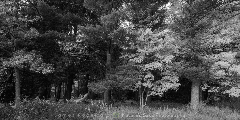 """Adirondack Fall B&W"" to benefit Lake George Land Conservancy"