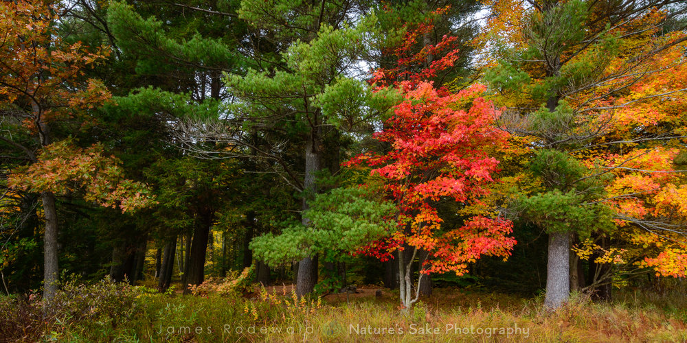 """Adirondack Fall"" to benefit Lake George Land Conservancy"