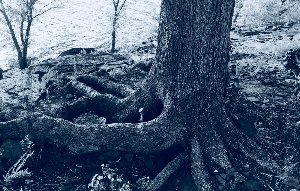 Roots BW 1.jpg