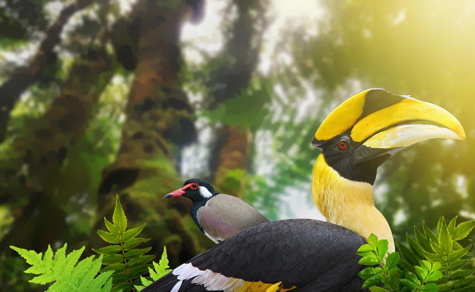 Langkawi_Bird_Watching.jpg