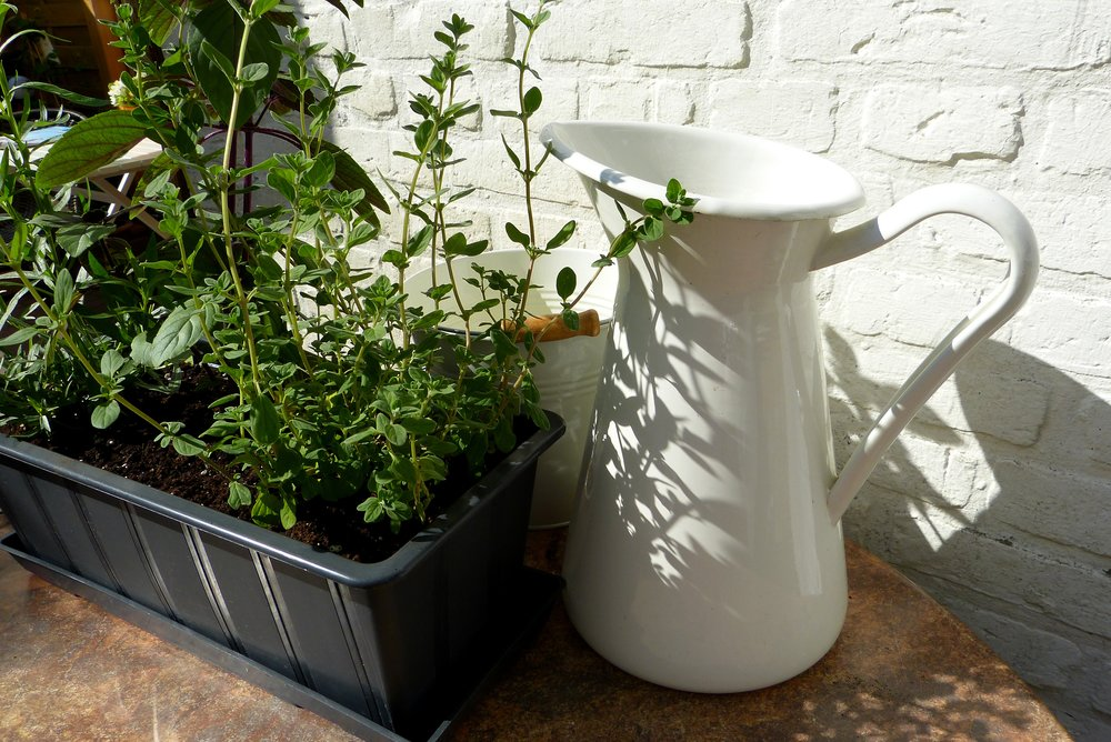 herbs-1441738.jpg