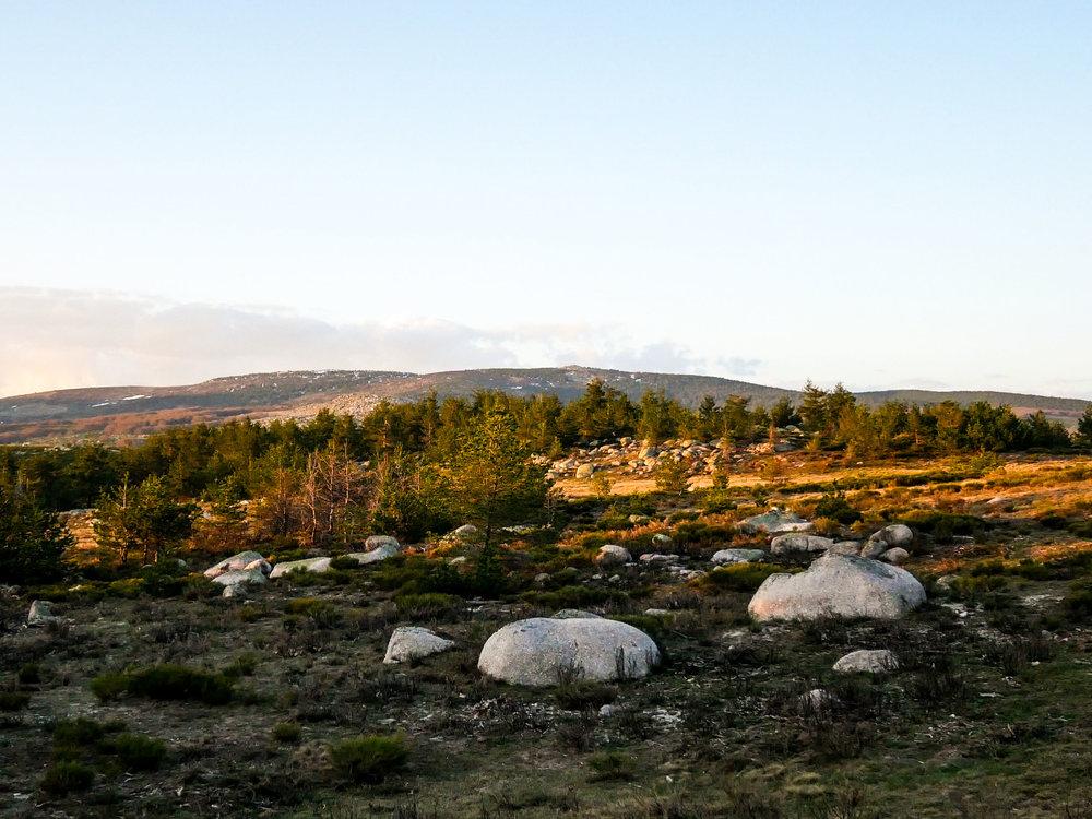 Chevauché au Mont Lozère