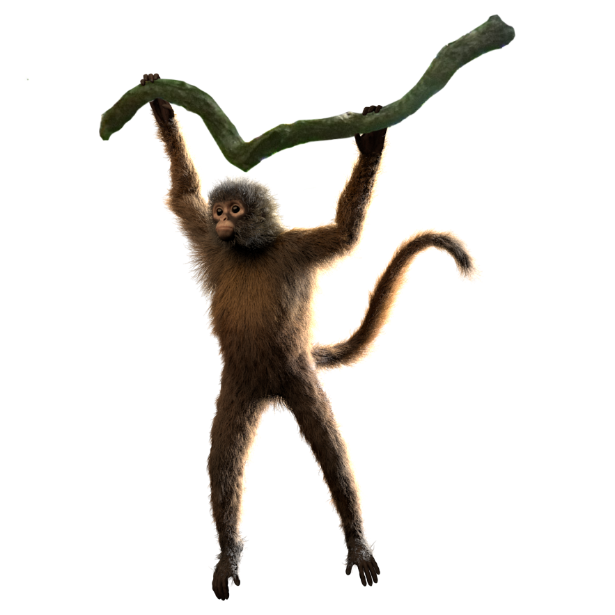 spiderMonkey_multiLayer_pose_v002.png
