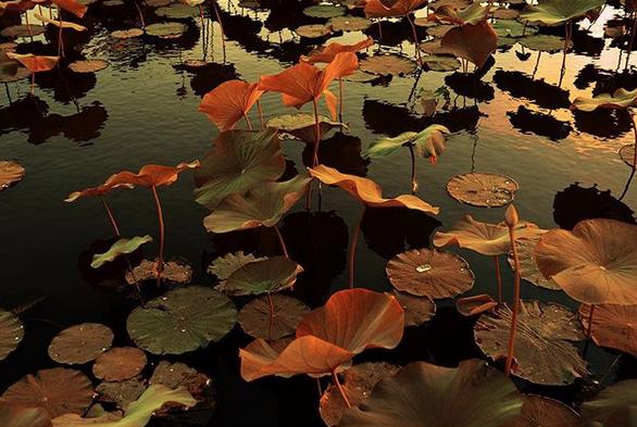 Dream of the Amazon. Venus' gardens {part.VIII}