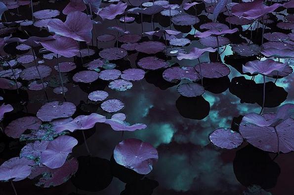 Where the Nile flows, the moon glows.. Venus' gardens {part.VII}