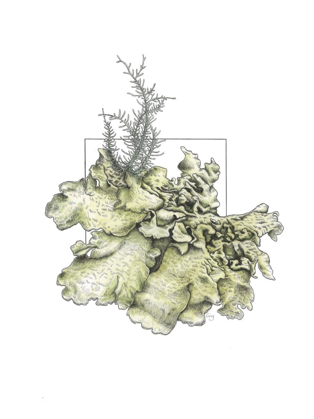 Lichen Landscape #8