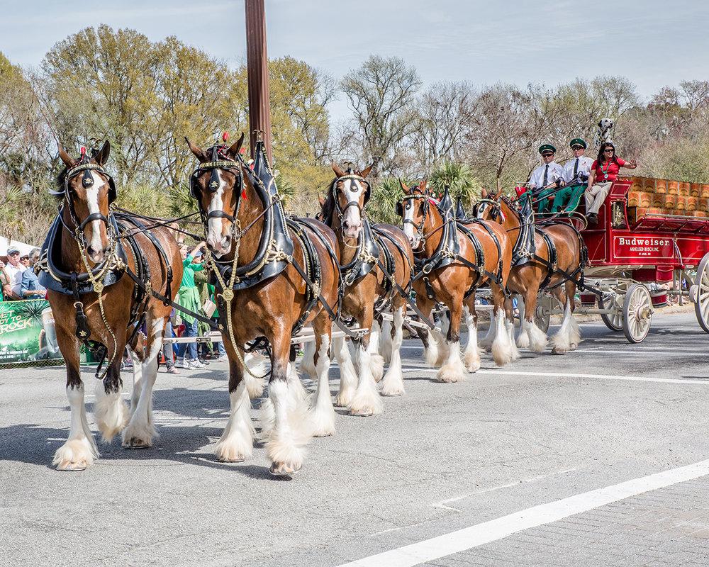 2015 HHI St Patty's Parade-72_web.JPG