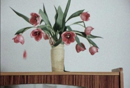 Wim van der Linden,  Tulips , 1966. Courtesy of the Collection Eye Filmmuseum, the Netherlands.