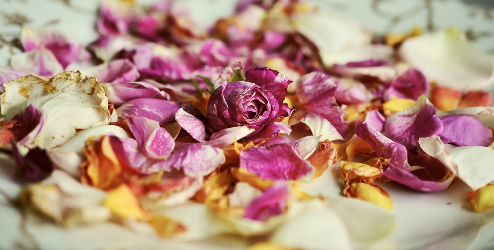 rose-petals-2446716.jpg