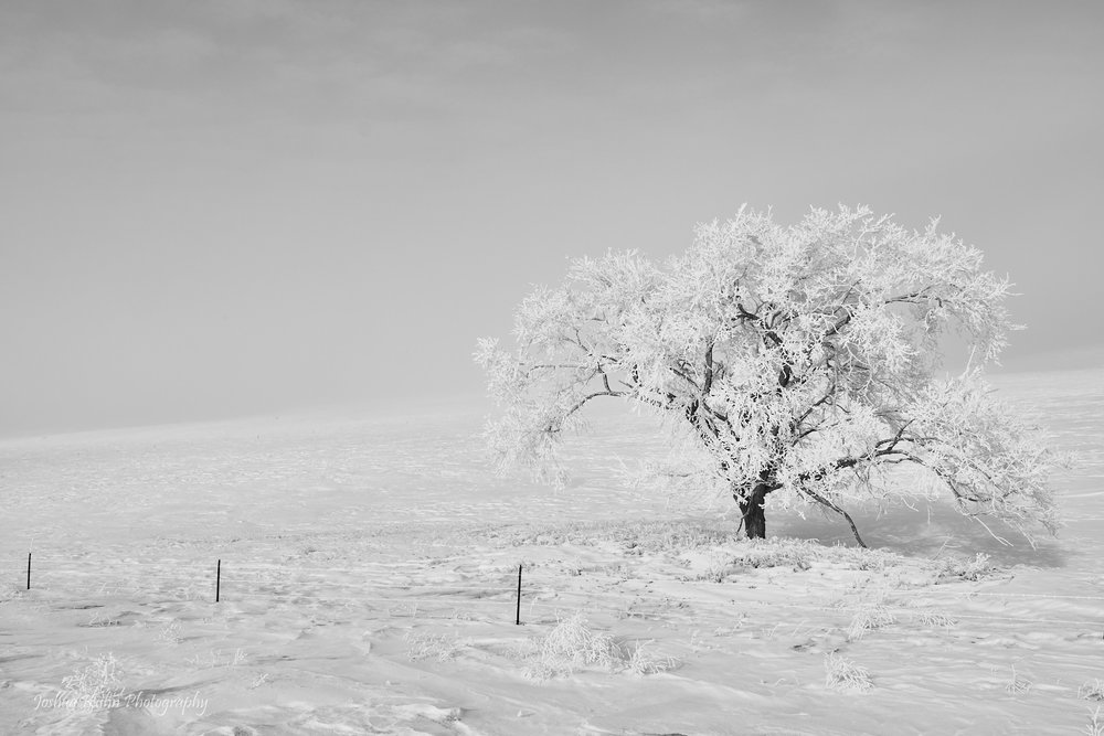 Desolate Frost