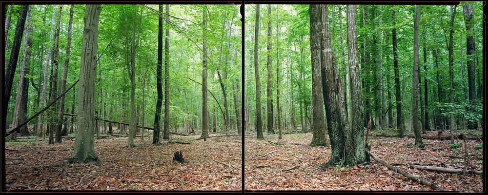 The Wilderness, Virginia