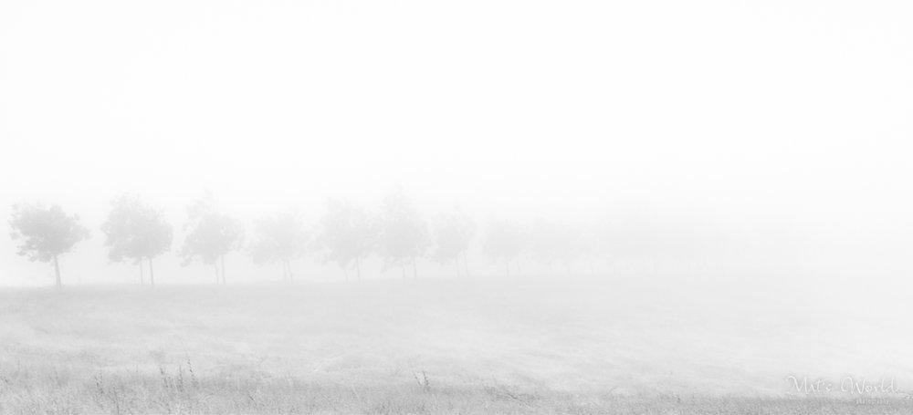 Fog (1 of 1).jpg