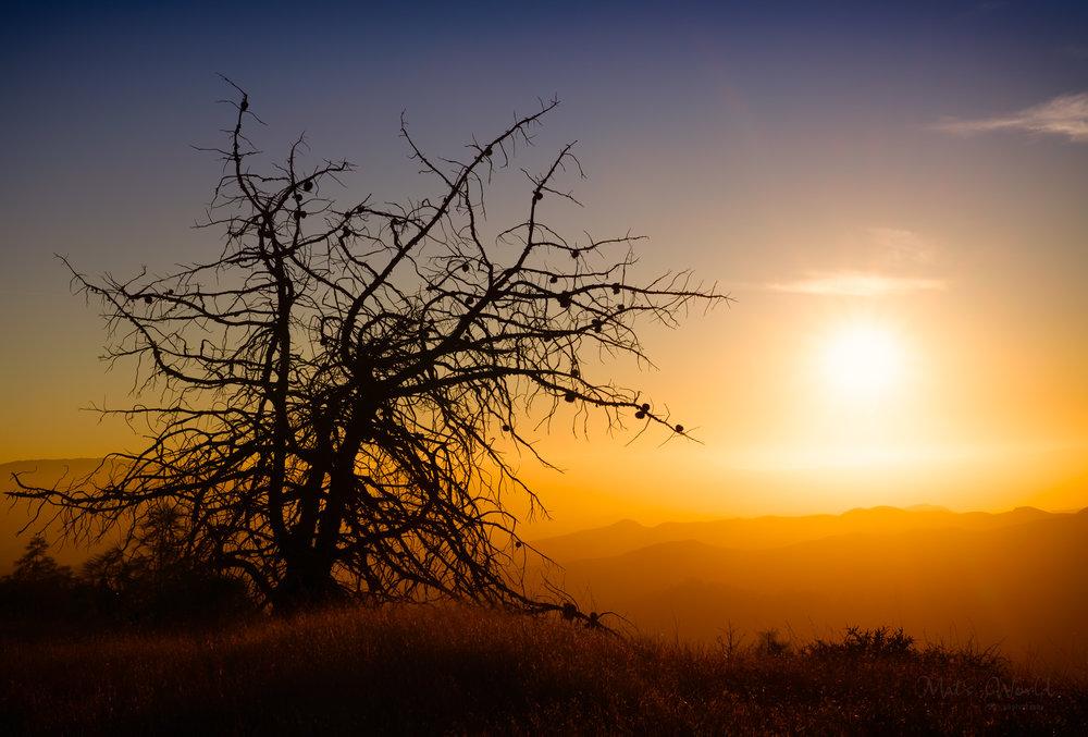 Deadtree (1 of 1).jpg