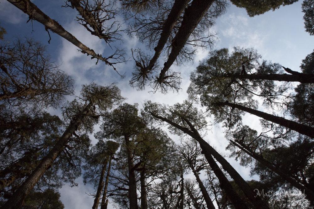 trees (1 of 1)-2.jpg