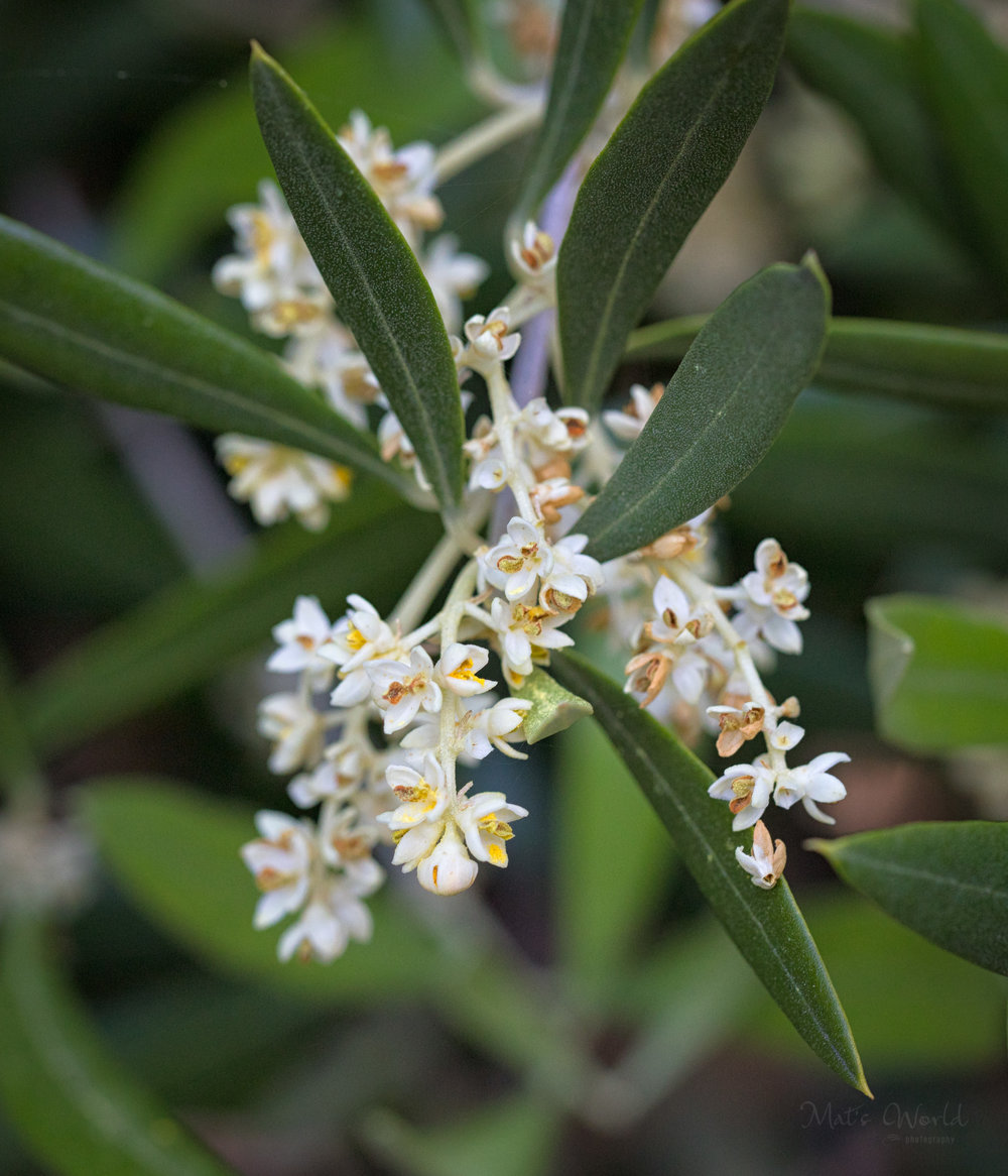 Olive365ANARepostaa (1 of 1).jpg