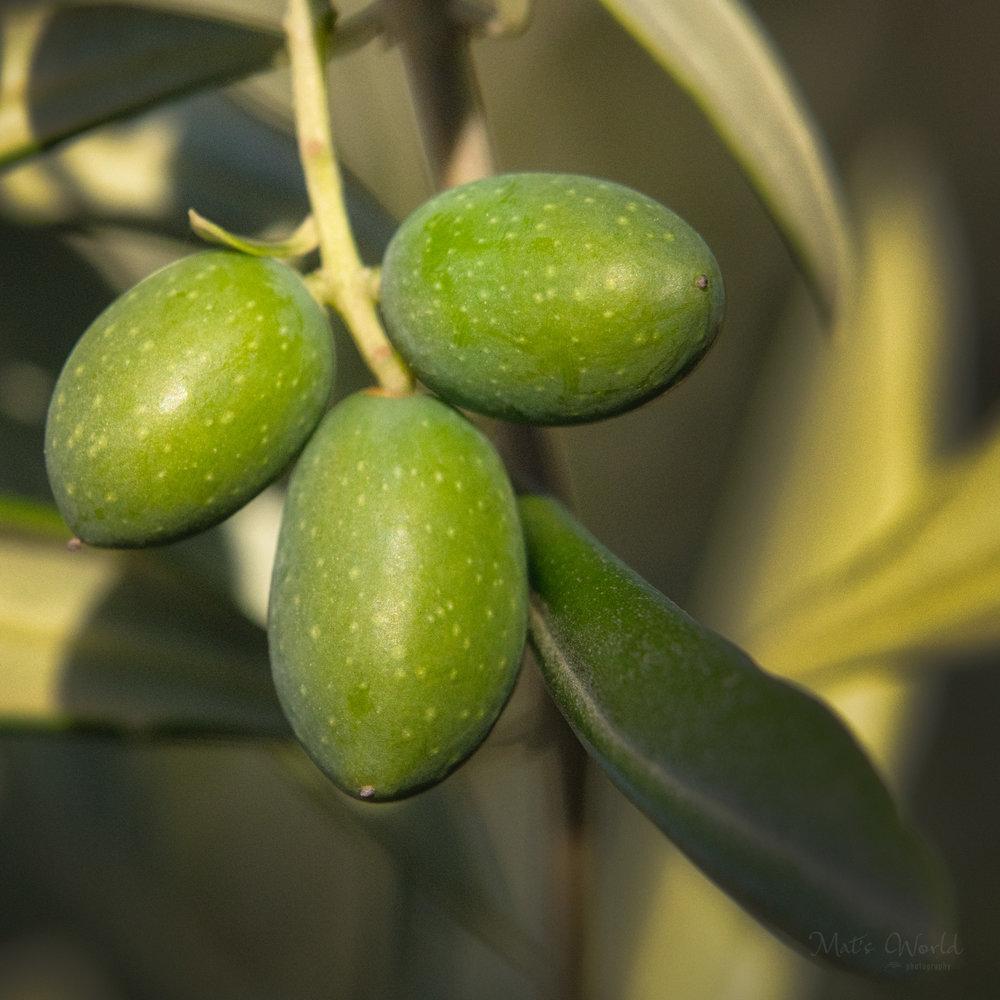 Olive365ANARepostB (3 of 4).jpg