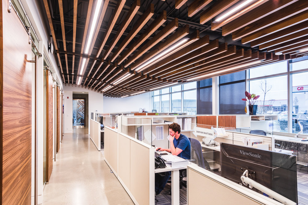 commercial head office open office space with wood slat ceiling