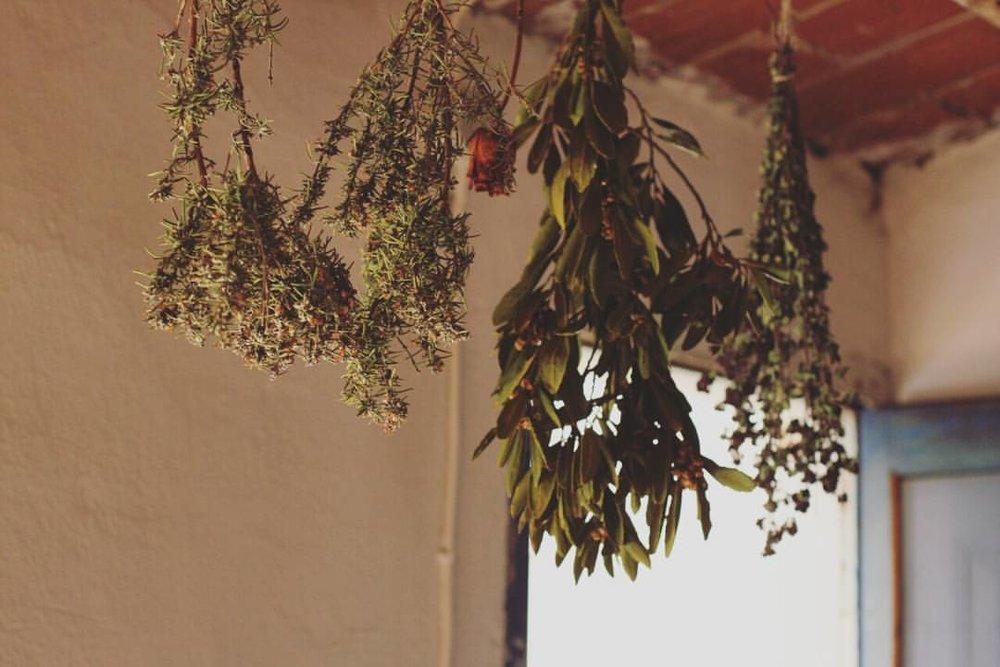 MANIFIESTO - la ideología que define los productos de Botànica