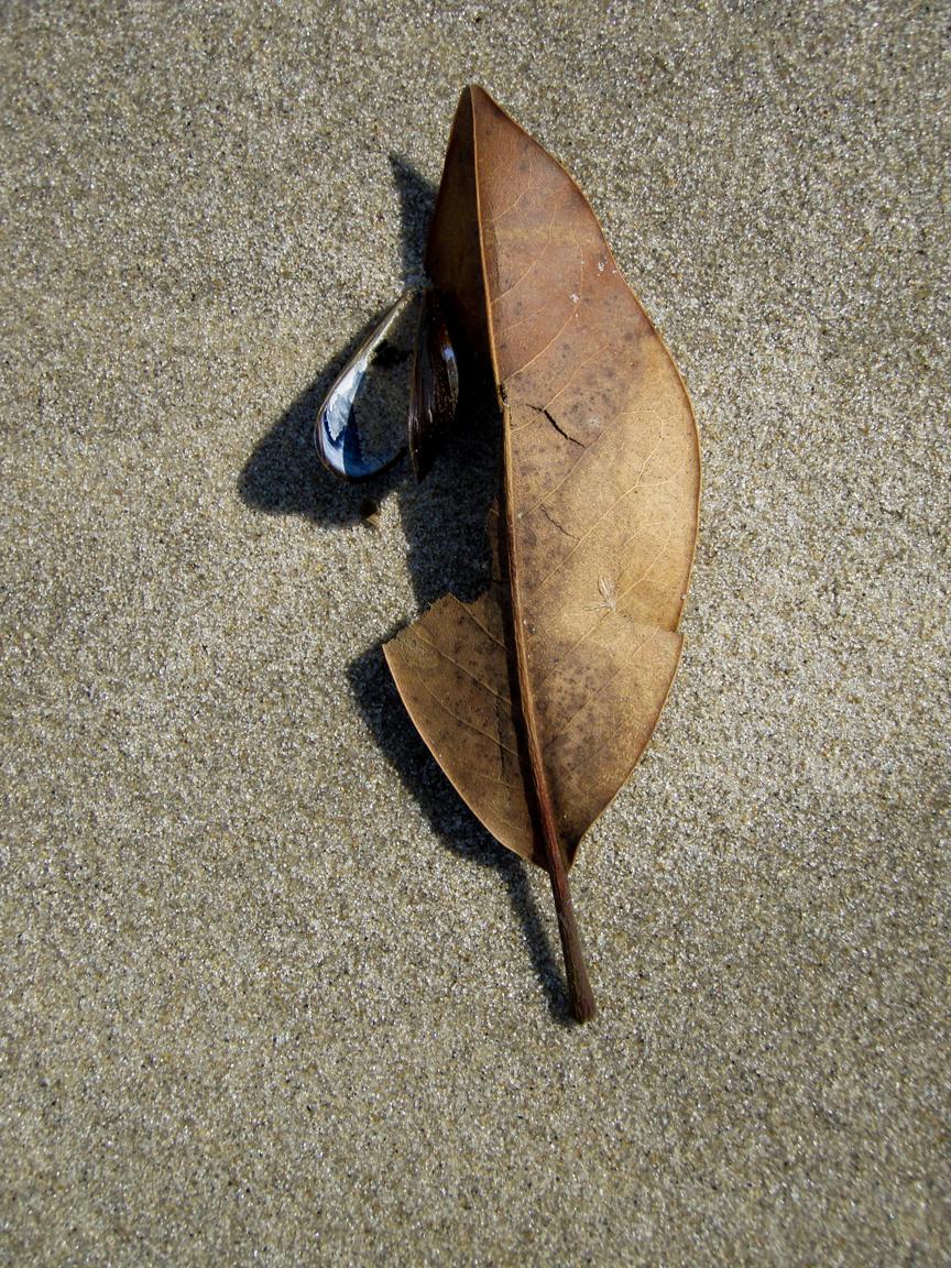 0003_Leaf on Beach web.jpg