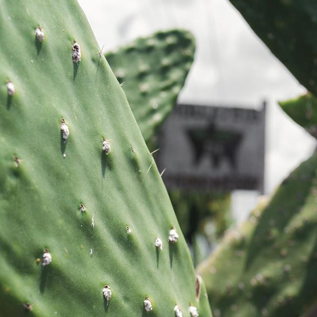 Aprende a ver México desde la mejor perspectiva, desde la raíz 💕✨🇲🇽✨💕 #C&B #vamonosdecraft . . . . . #mexico #cdmx #vive_mexico #plants #cactus #garden #nature #outdoors #hiking #artesania #pueblomagico #ecotourism #tourism #mexico_maravilloso #travel #ecofriendly #ecommerce #ecoturismo #tradition #traditional #craft #breakfast #food #discover
