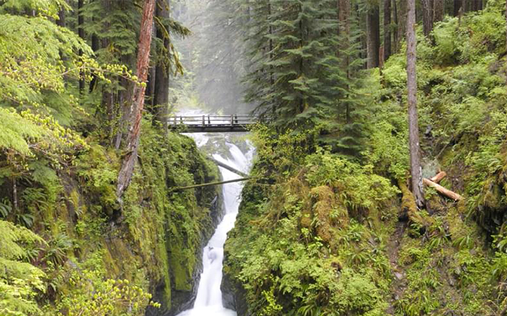 Website_0000s_0001s_0038_olympic-rainforest-waterfall-bridge_H1.png