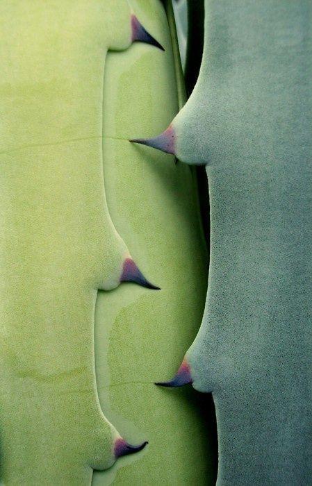Invite (via  Pin by Kelly Wearstler on Succulents | Pinterest )