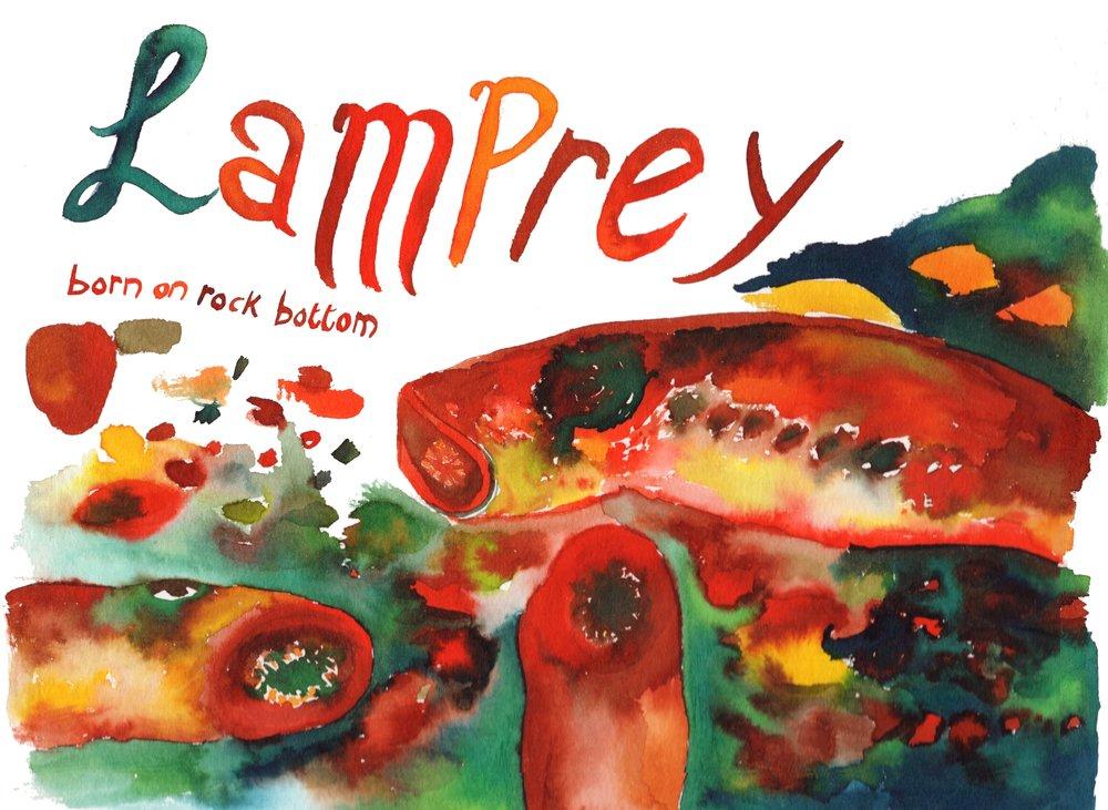 lamprey born on rock bottom.jpg