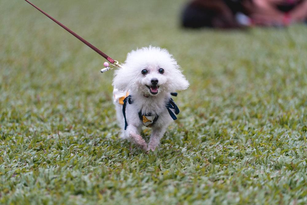 JAZZ FOR DOGS - Botanic Gardens