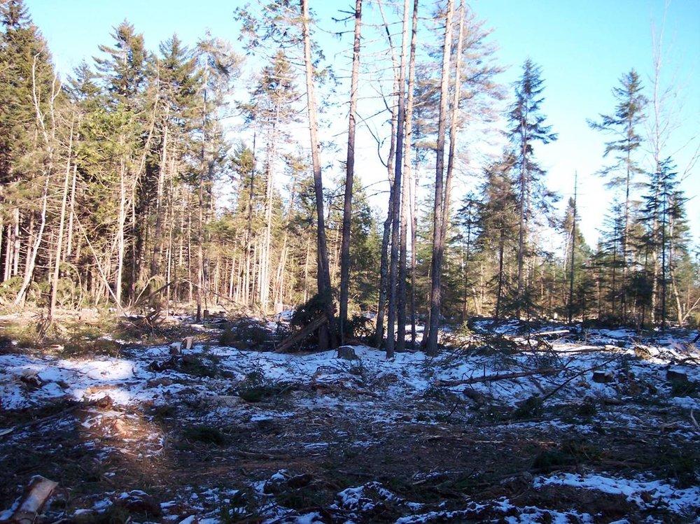 deer-yard-destroyed-.jpg