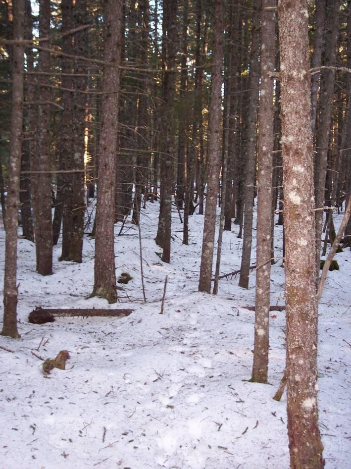 deer-yard-healthy.jpg