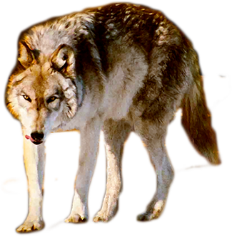 Wolf-325.png